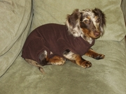 Dachshund French Chololate Fleece Jammies