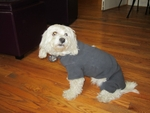 Dachshund Graphite Fleece Bodysuit
