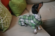Dachshund Indoor/Outdoor Bodysuits