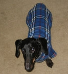 Dachshund Blue Plaid Indoor/Outdoor Bodysuit
