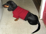 Dachshund Fleeced Pomegranite Sweater