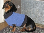 Dachshund Fleeced French Blue Sweater