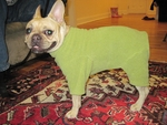 Pug, Boston Terrier and French Bulldog Pistachio Fleece Bodysuit