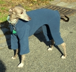 Italian Greyhound Slate Blue Fleece Outdoor Bodysuit