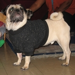 Pug Black Fleeced Sweater