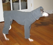 Italian Greyhound  Smoky Grey  Hooded Fleece Bodysuit