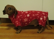 Dachshund Winter Snowflakes Indoor/Outdoor Bodysuit