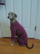 Italian Greyhound Plum Romper