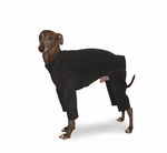 Italian Greyhound Clothing Line