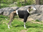 Whippet Black w/Cream Cuffs Heavyweight Sweatshirts