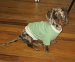 Dachshund Grass Green Lightweight Shirt