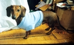 Dachshund Azure Blue Lightweight Shirt
