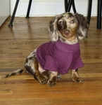 Dachshund Lightweight Shirt - Plum