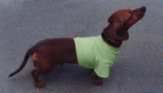 Dachshund Mint Green Lightweight Shirt