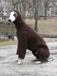 Whippet French Chocolate Hooded Fleece Bodysuit