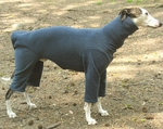 Whippet Heather Slate Fleece Bodysuit