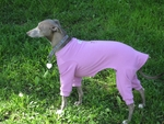 Italian Greyhound Romper - French Rose