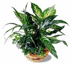 Mix of green plants in a basket