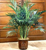Tall Palm Floor Plant 5ft