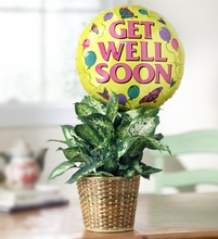 Get Well Green Plant with Balloon Just because