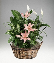 Mixed foliage basket
