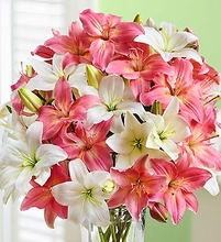 Pink and White Lilies in Vase