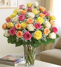 Elegance Premium Long Stem Assorted Roses 3 dozen