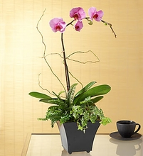 Exotic Island Orchid