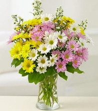 One Dozen Daisies Arranged in a Vase