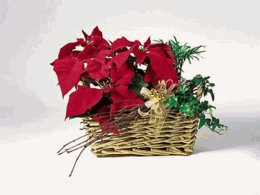 Chrismas Poinsettia Garden Basket