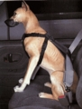 Car Dog Harness Large (50 to 80 lbs)