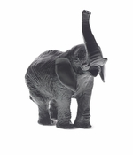 Daum Crystal Elephant Medium Black