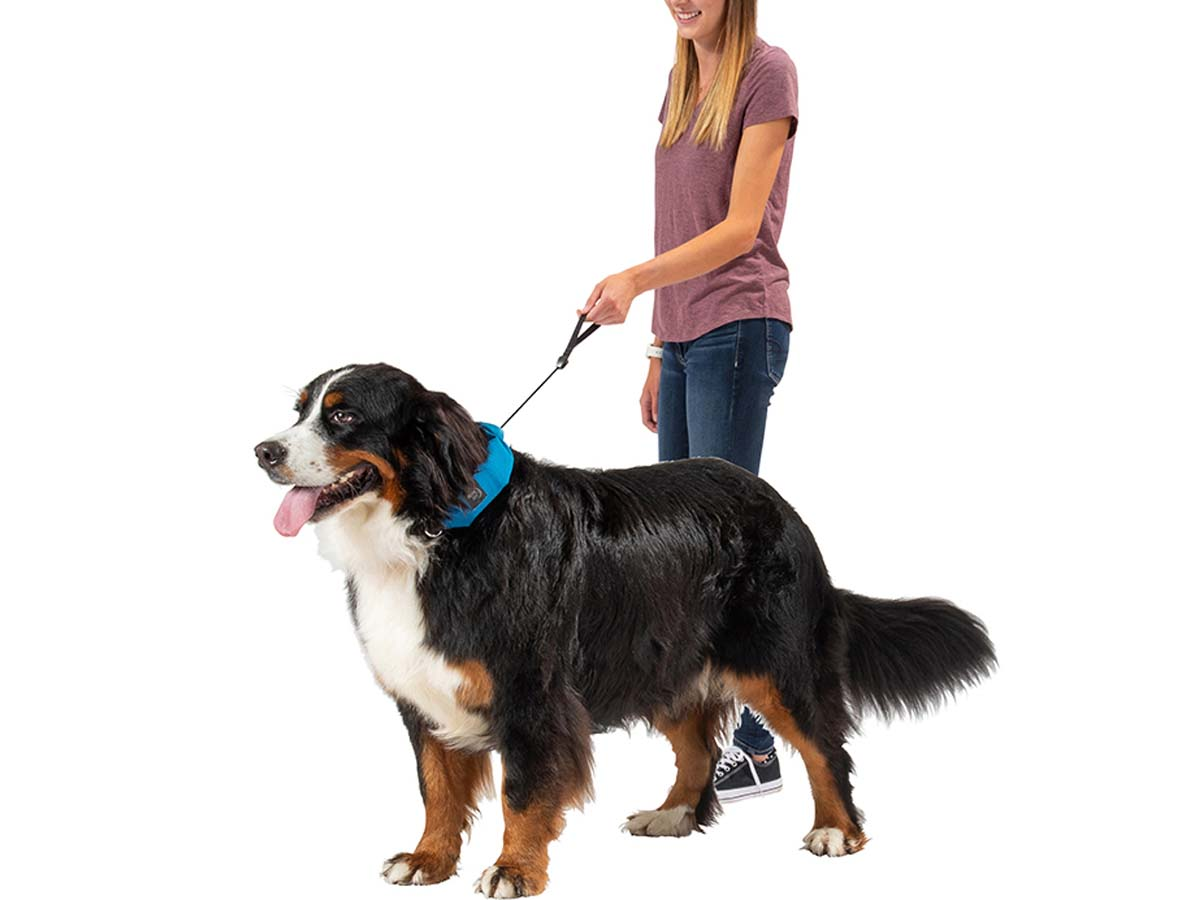 RadDog All-In-One Collar and Leash - In Use