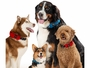 RadDog All-In-One Collar and Leash - Dogs