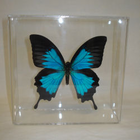 Butterfly Art in Acrylic Cases