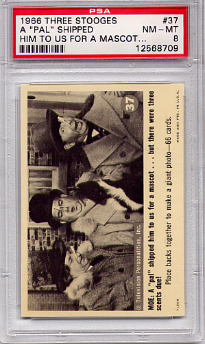 "1966 Three Stooges - A ""Pal"" Shipped Him To Us #37 PSA 8"