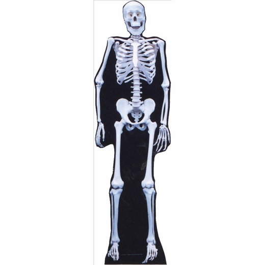 Skeleton Lifesized Standup