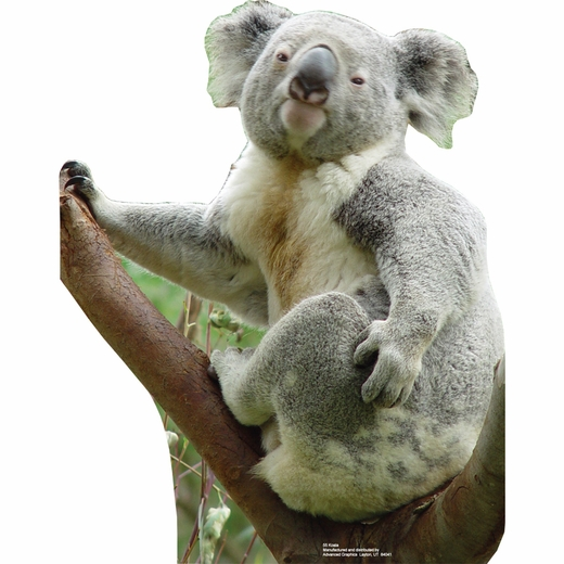 Koala Bear-Lifesized Standup