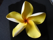 "5 "" POINTED PETAL PLUMERIA FLOWER HAIR PICK Yellow w/ Golden Yellow Stripes"