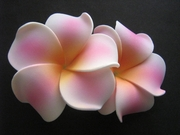 "2 "" Inch Curvy Petals Plumeria Flower Hair Clip White w/ Pink Dashes Yellow Center"