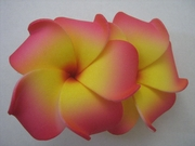 "2 "" Inch Curvy Petals Plumeria Flower Hair Clip Sherbet Pink w/ Yellow Center"