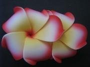"2 "" Inch Curvy Petals Plumeria Flower Hair Clip  White w/ Yellow Center Red Hub & Red Tips"