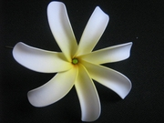 6 Inch Tiare Flower Hair Pick-White w/ Yellow Center