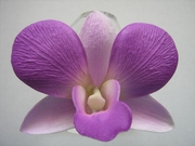 ORCHID Flower Hair CLIP Glowing Purple