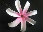 6 Inch Tiare Flower Hair Pick-White w/ Pink Center