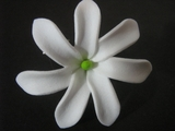 "Mini Tahitian Gardenia ""Tiare""  Flower-All White"
