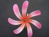 "4"" TAHITIAN GARDENIA TIARE  COLORED FLOWER- Sherbet Pink Swirls"