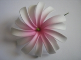 "4"" DOUBLE PETALS TIARE FLOWER HAIR  PICK-White w/ Pink Center"