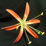 "4.5""  SPIDER LILY STRAIGHT SINGLE PETALS PICK-Red w/ Yellow Center"