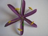 "4.5""  SPIDER LILY STRAIGHT SINGLE PETALS PICK-Purple"